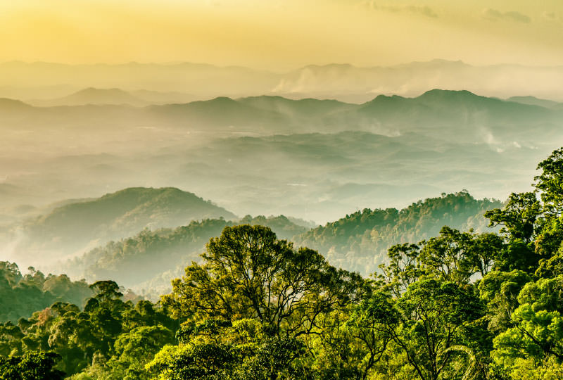 Malaysia Regenwald